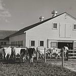 herding real estate